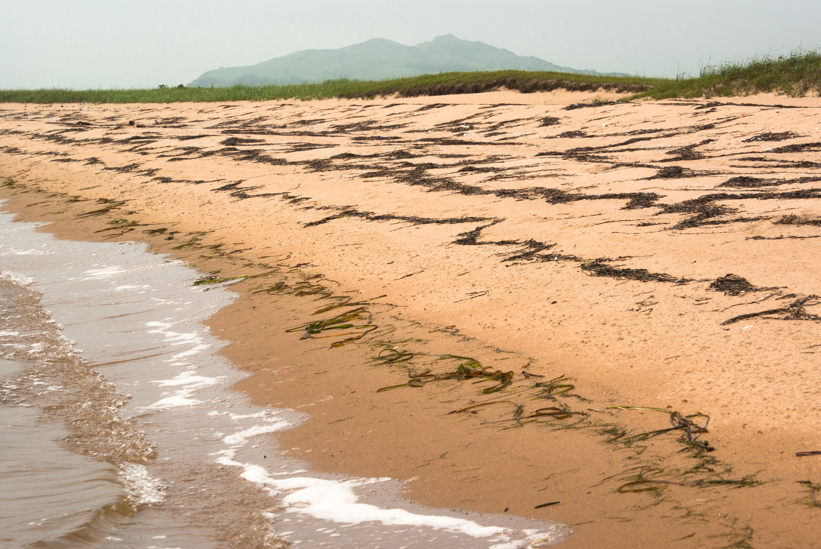 Größte Algenplage auf Mallorca (Titelbild)